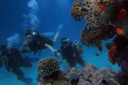 Snorkel Vs. Scuba Diving: Which Is Better