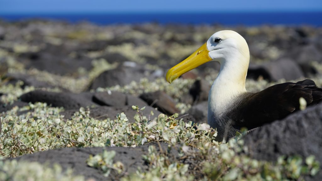 Galapagos Island: Top 5 Best Dive Sites